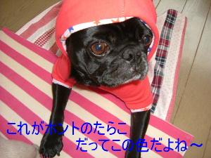 2006_0201fuku0015b.jpg