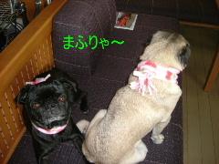 2006_0201fuku0019b.jpg