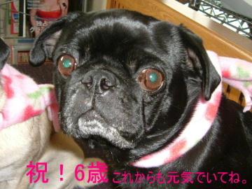 2006_0201fuku0026b.jpg