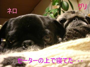 2006_0201yuki0024b.jpg