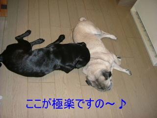 2006_0205hamu0010b.jpg