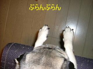 2006_0208sippo0008b.jpg
