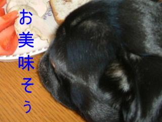 2006_0211umioto0028.jpg