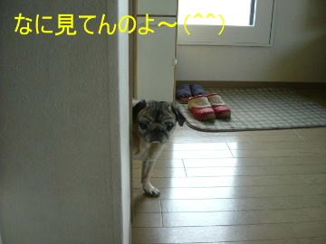 2006_0218nozoki0001b.jpg