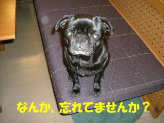 2006_0227umai0009.jpg
