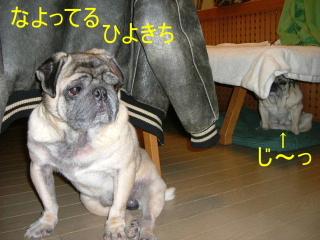 2006_0304hiyo20007b.jpg