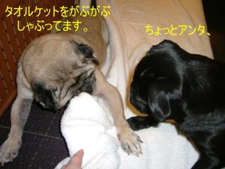 2006_0304hiyo20012b.jpg