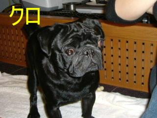 2006_0309piyohiko0009.jpg