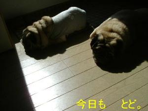 2006_0313hiyohiro0005b.jpg