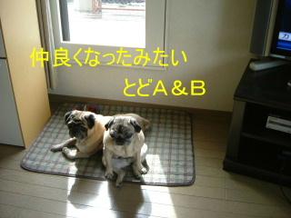 2006_0314hiyo110006b.jpg