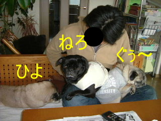 2006_0315hiyo120004.jpg