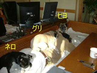 2006_0316hiyo130005b.jpg