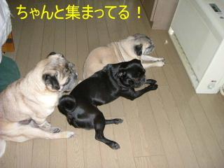 2006_0317hiyohos0001.jpg