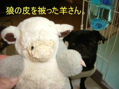 2006_0317hiyohos0007.jpg