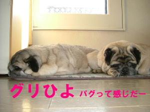2006_0318hiyokire0004b.jpg