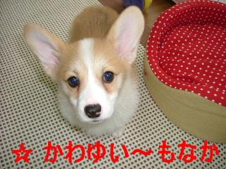 2006_0321monaka0001b.jpg
