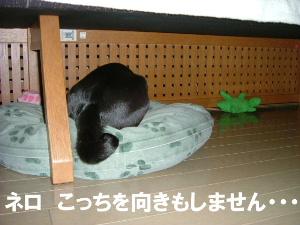 2006_0330puara0005.jpg