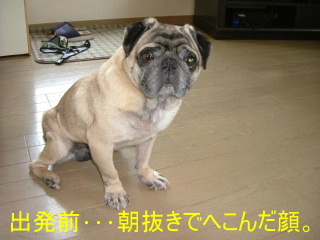 2006_0401hiyoope0001b.jpg