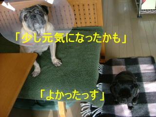 2006_0402fukuraya0011.jpg