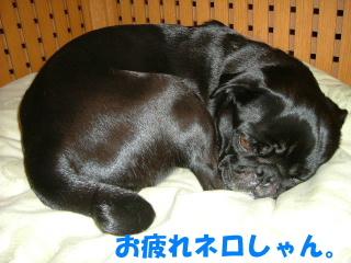 2006_0412motoni0012.jpg