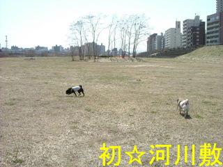 2006_0414hatukawa0016b.jpg