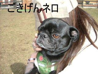 2006_0416temaki0019b.jpg