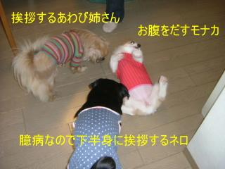 2006_0417monaka0005.jpg