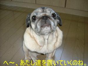 2006_0504yama0002b.jpg