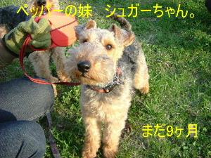 2006_0504yama0027b.jpg
