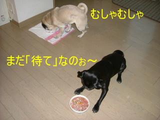 2006_0511gohan0001.jpg