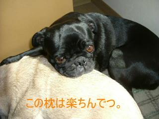 2006_0513sakura0004.jpg