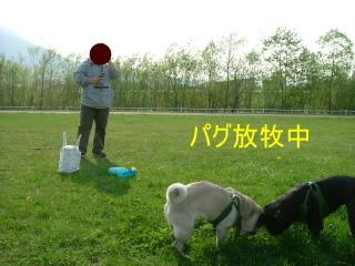 2006_0517ka0003.jpg