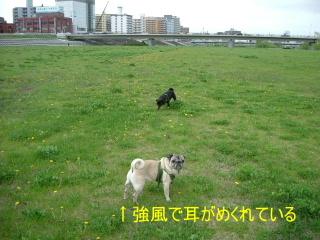 2006_0520sami0007.jpg