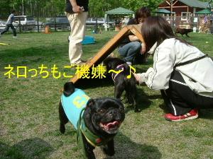2006_0605sun0003b.jpg