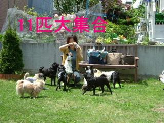 2006_0612jinbe0010.jpg