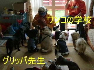 2006_0612jinbe0012b.jpg