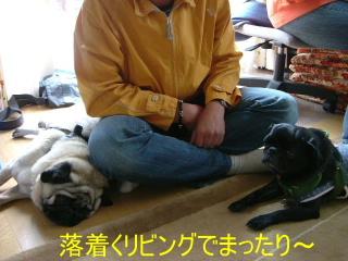 2006_0612jinbe0024.jpg