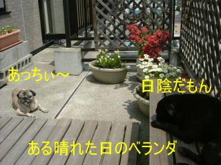 2006_0615bera0010.jpg