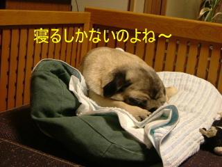 2006_0621kayo0002b.jpg