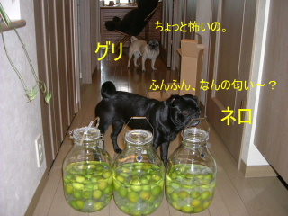 2006_0622umesyu0006b.jpg