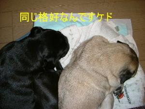 2006_0624ameda0005.jpg