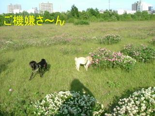 2006_0627kawa0007.jpg