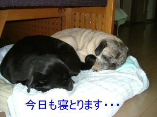 2006_0629kari0004.jpg