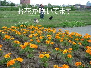 2006_0701tenki0013b.jpg