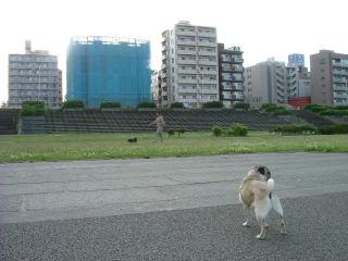 2006_0704gn0003.jpg