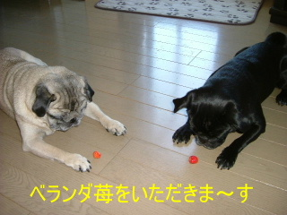 2006_0704ichigo0002b.jpg