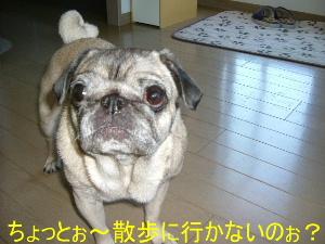 2006_0704ichigo0005b.jpg