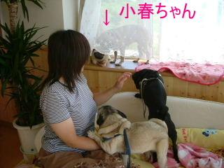 2006_0730morap0018b.jpg