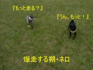 2006_0819saku0008.jpg