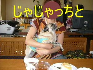 2006_0824celeb0012b.jpg